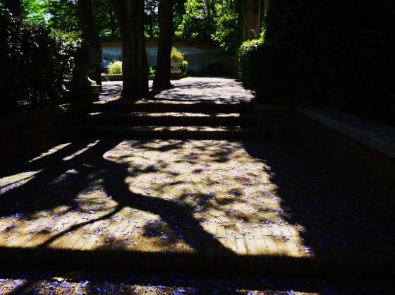 Sombra de jacarandáes.Foto de Stella.