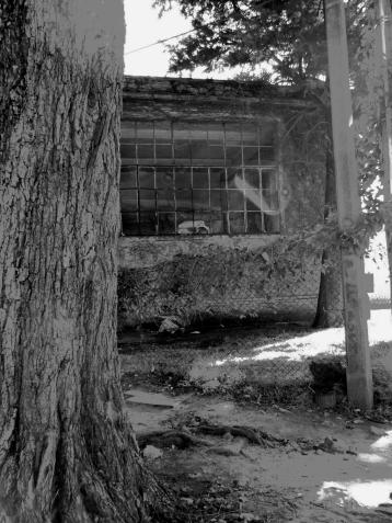 Casas abandonadas. Foto de Stella.